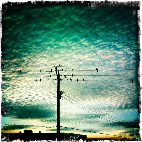 Day 35. Birds on a wire