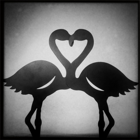 Day 81. Flamingo Love