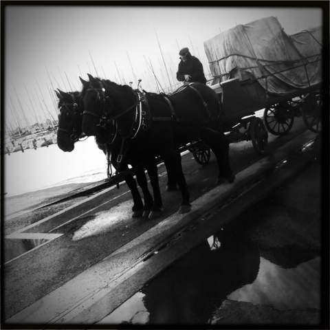 Day 108. You Can Lead a Horse to Water…