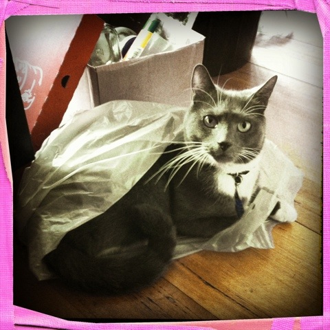 """Day 122. """"let the cat out of the bag"""""""