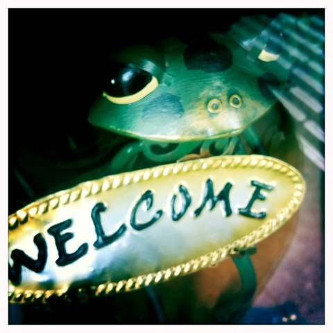 Day 170. Welcome says the frog