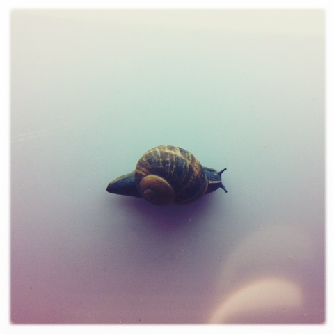 Day 373. Snail Power