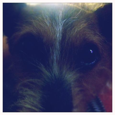 Day 382. Puppy Dog Eyes