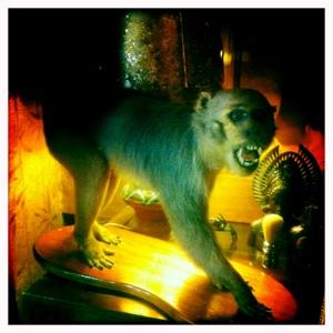 Day 488. Monkey Business