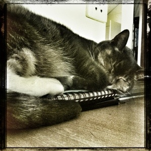 Day 582. let sleeping cats lie…