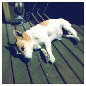 Day 597. Let Sleeping Dogs Lay