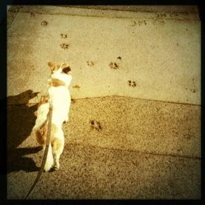 Day 619. Walkin the Dog