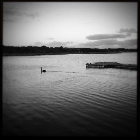 Day 671. Swan Lake