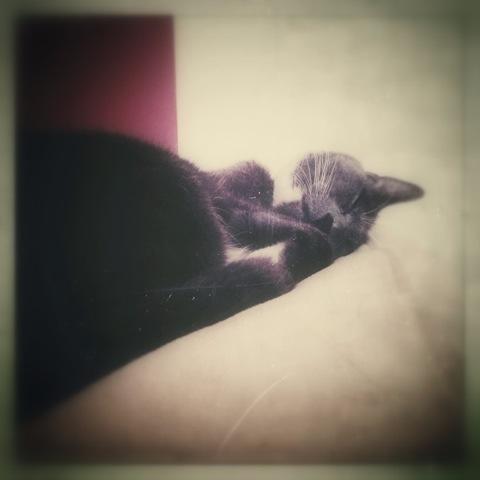 Day 730. precious Toby