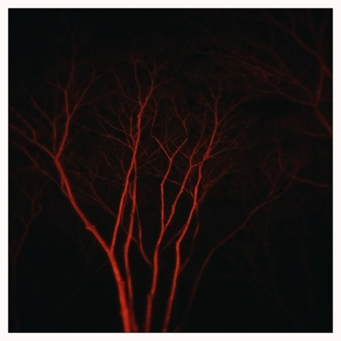 Day 744. Flame Tree