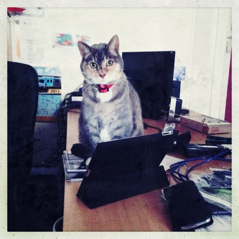 Day 795. my assistant