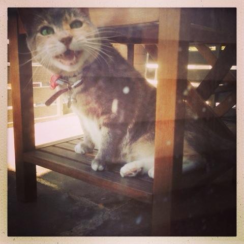 Day 998. cat talk