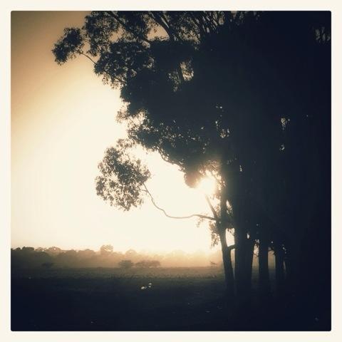 Day 1083. Dawn