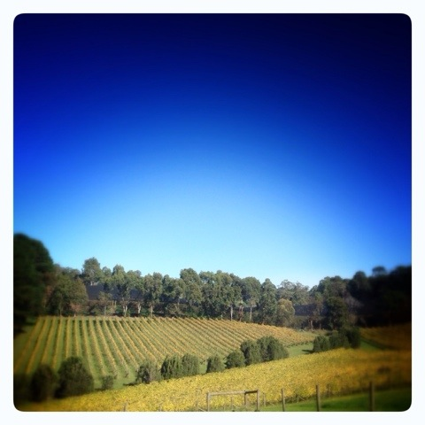Day 1117. Day on the Vines