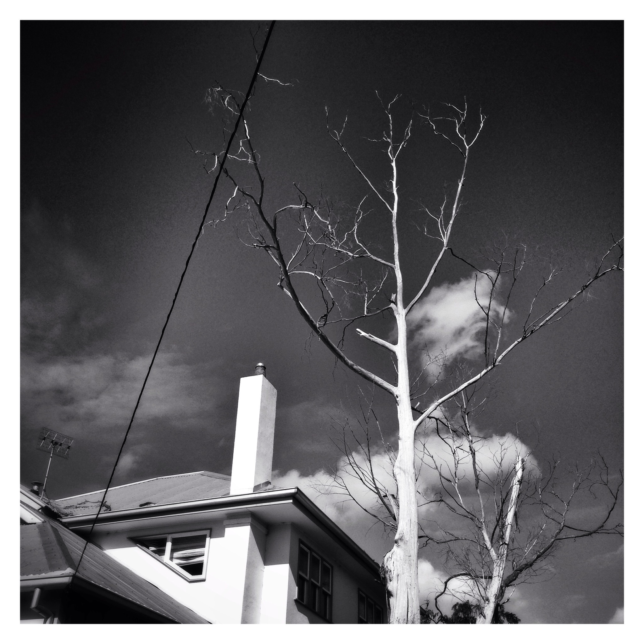 Day 1341. Tree Line