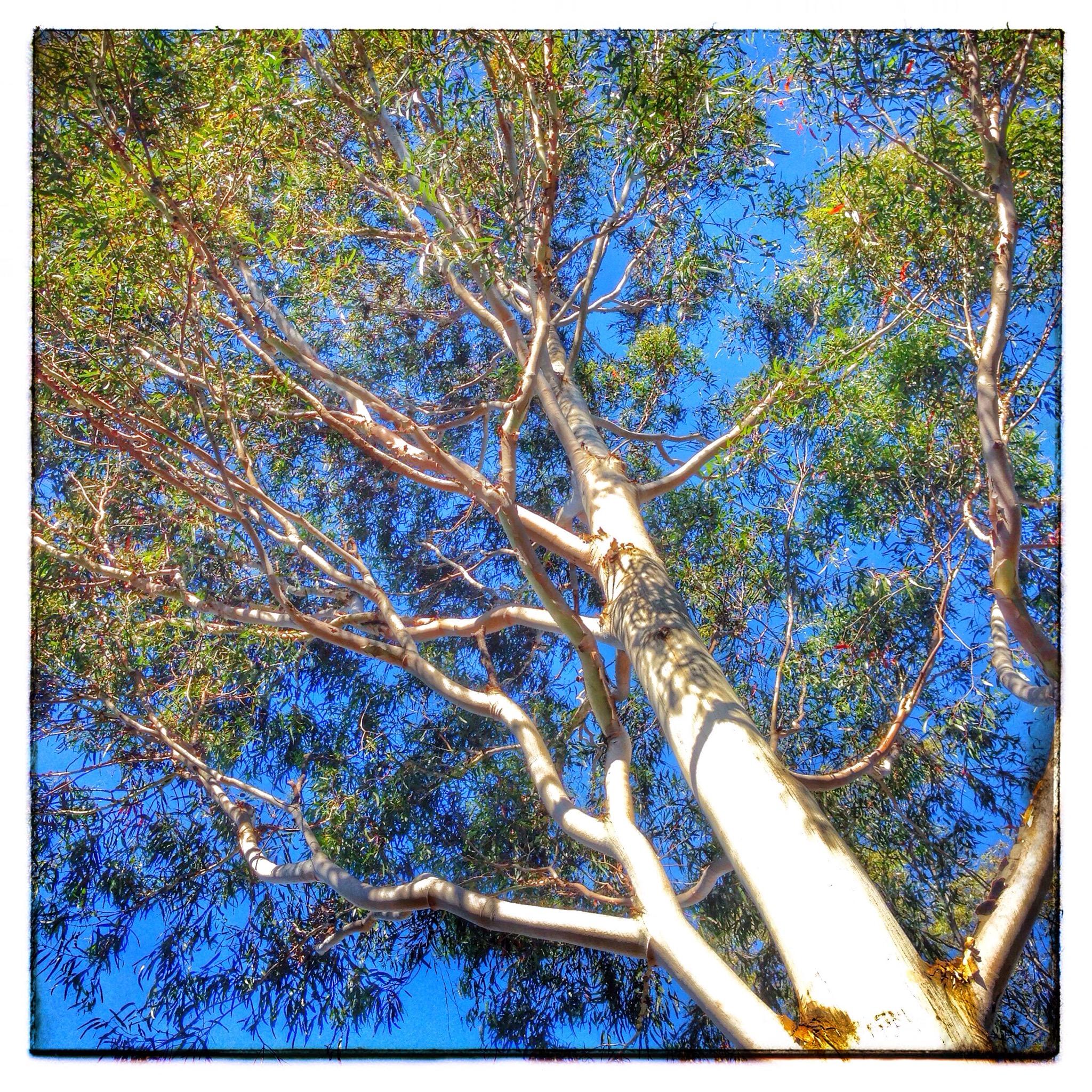 Day 1346. Tree