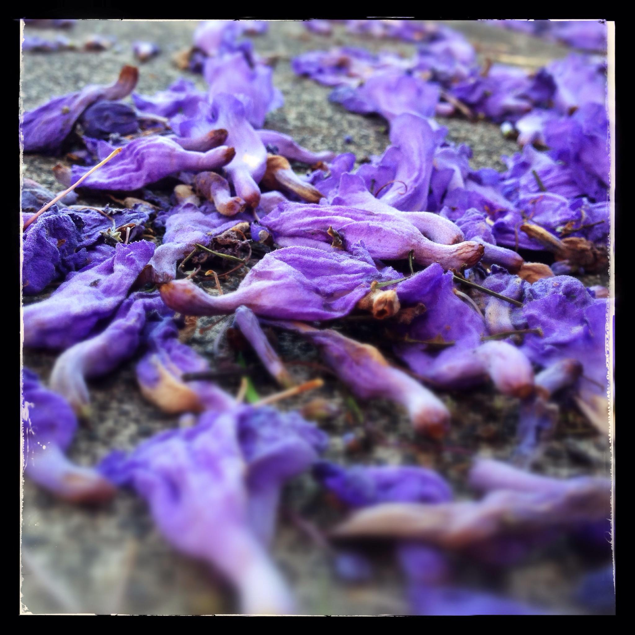 Day 1348. Fallen Flowers