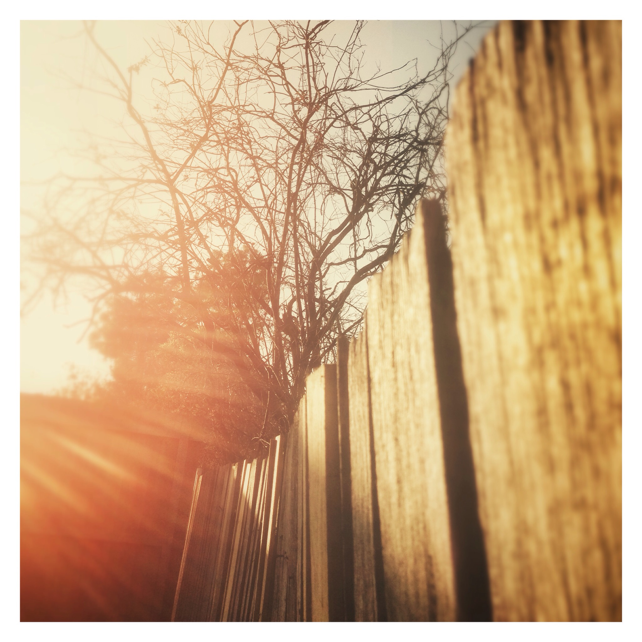 Day 1354. Over the Fence