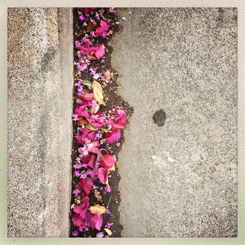 Day 1404. flowered gutter…