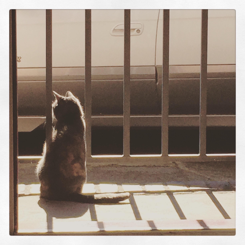 Day 1502. daydreamer…