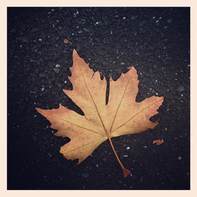 Day 1509. last of autumn…