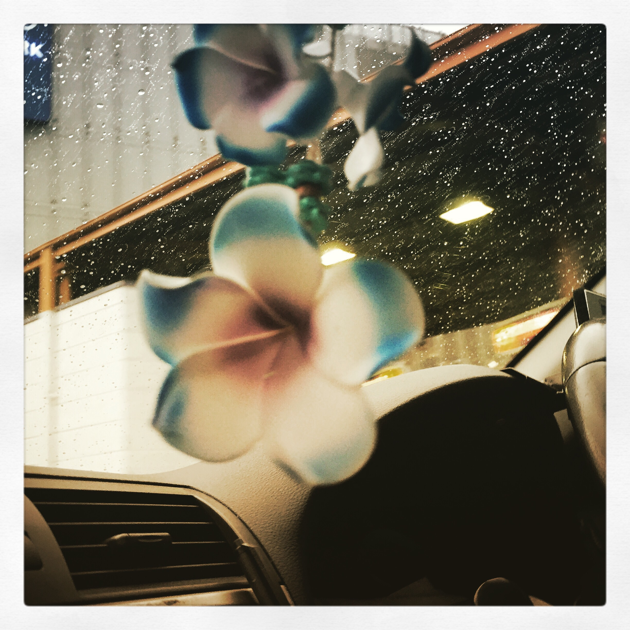 Day 1716. in taxi bloom…