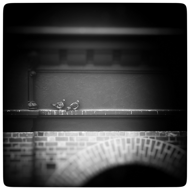 Day 1785. Love Birds