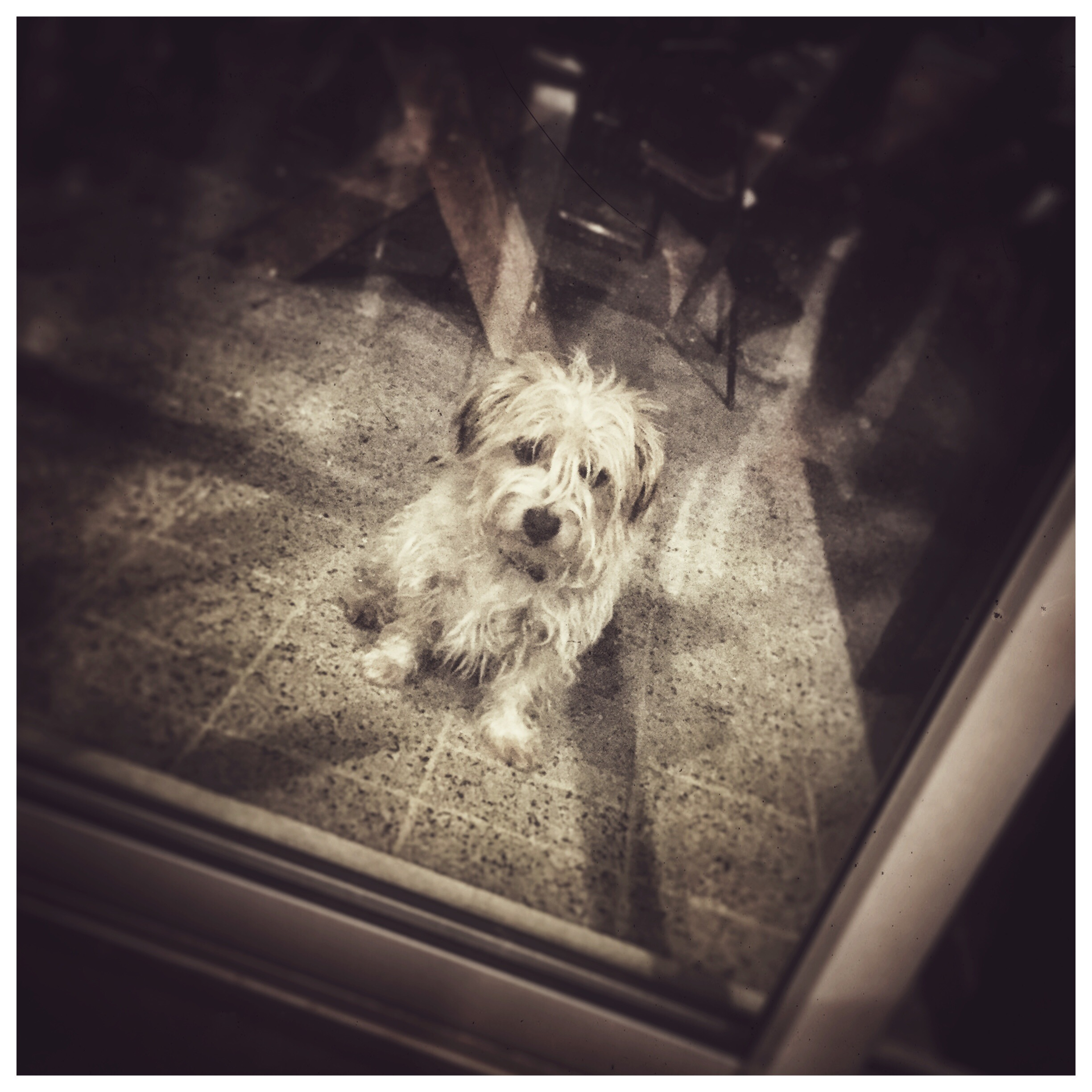 Day 1800. How Much is that Doggy in the Window