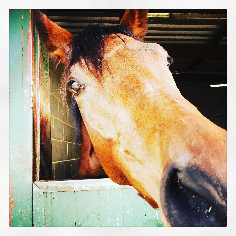 Day 1918. horsing around…