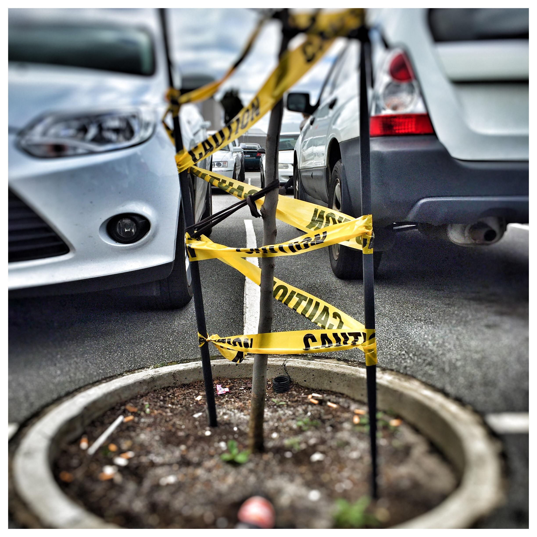Day 1998. Hazard Plant