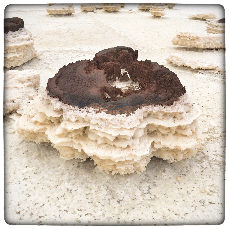Day 2092. Salt Cake
