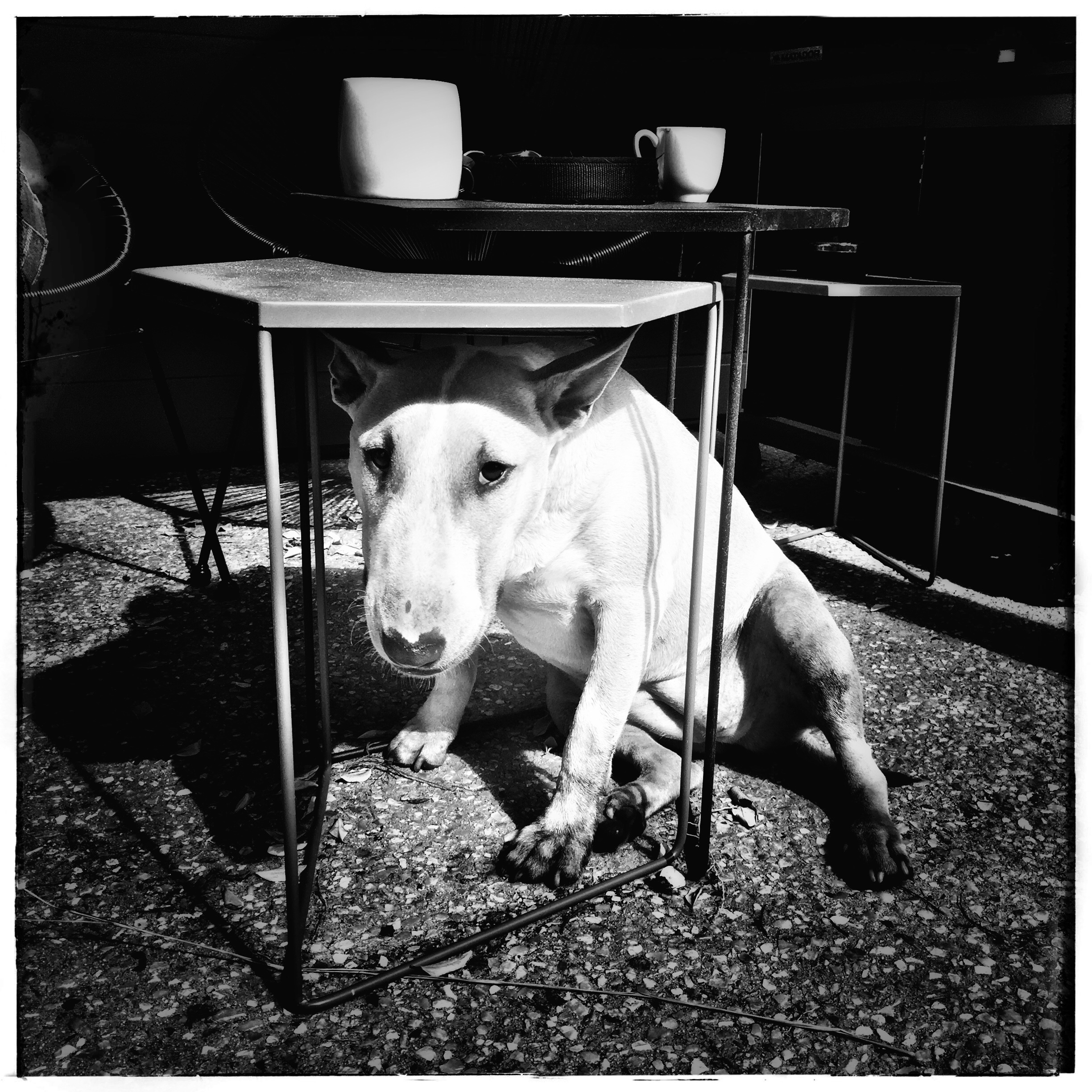 Day 2044. Maggie Table